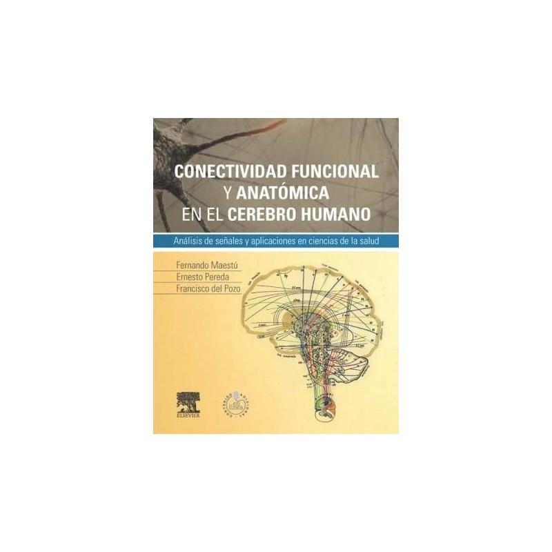 Conectividad funcional y anatómica en el cerebro humano
